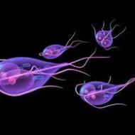 Loengus tuleb juttu:  Teguritest, mis meid patogeenide rünnakule vastuvõtlikuks teevad Parasiitide eripalgelisest mõjust meie kehale ja nende rollist autoimmuunhaiguste välja kujunemisel Mao- ja kaksteistsõrmiksoole haavandeid põhjustava helikobakteri pärssimisest toitumisraviga Borrelioosi loodusravist ja lisanditest, millega organismis tasakaalu taastada Seenhaigustest ja pärmseene vohamisega kaasnevate vaevuste loodusravist
